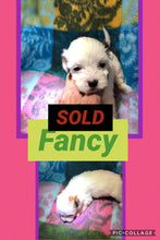 SOLD- Click On Picture For More Info- Deposit for Fancy