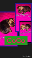 SOLD- Click On Picture For More Info- Deposit for CoCo
