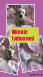 SOLD- Click On Picture For More Info- Deposit for Winnie