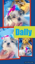 SOLD- Click On Picture For More Info- Deposit for Dally