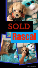 SOLD- Click On Picture For More Info- Deposit for Rascal