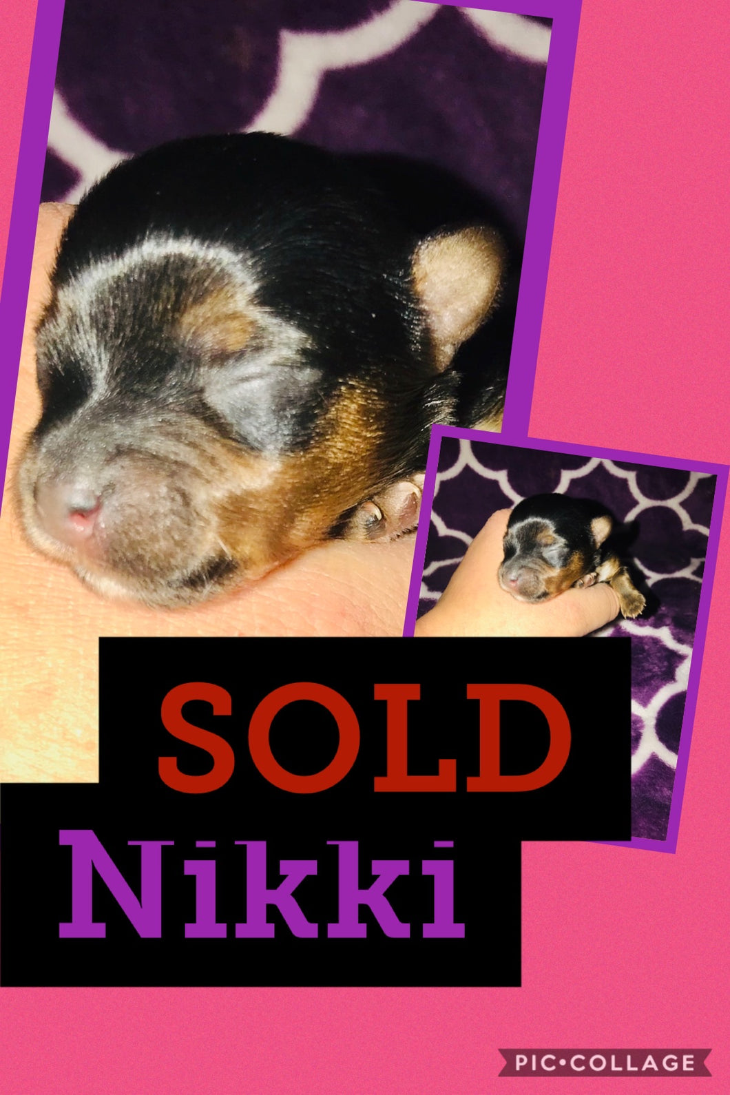SOLD- Click On Picture For More Info- Deposit for Nikki