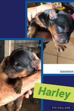 HOLD- Click On Picture For More Info- Deposit for Harley