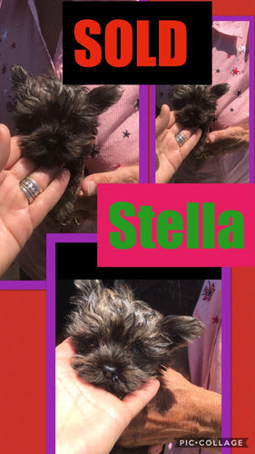 SOLD- Click On Picture For More Info- Deposit for Stella