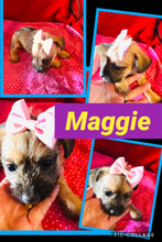 SOLD- Click On Picture For More Info- Deposit for Maggie