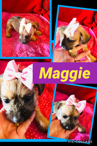 Click On Picture For More Info- Deposit for Maggie