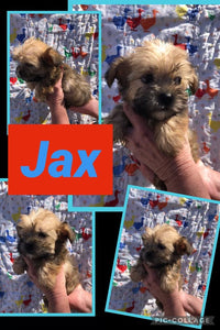 Click On Picture For More Info- Deposit for Jax