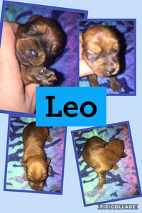 SOLD- Click On Picture For More Info- Deposit for Leo