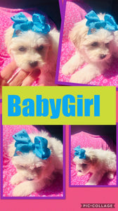SOLD- Click On Picture For More Info- Deposit for BabyGirl