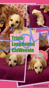 SOLD- Click On Picture For More Info- Deposit for Trixie