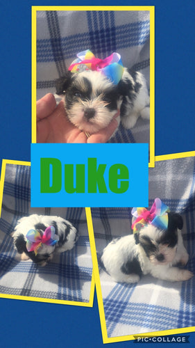 Click On Picture For More Info- Deposit for Duke