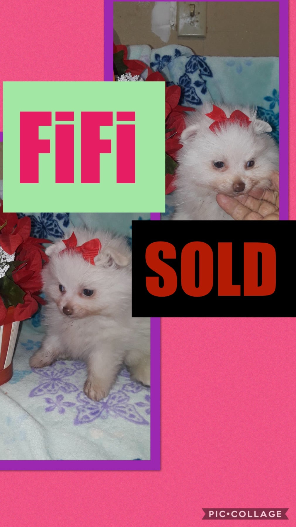 SOLD- Click On Picture For More Info- Deposit for FiFi