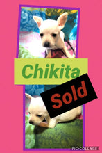 SOLD- Click On Picture For More Info- Deposit for Chikita