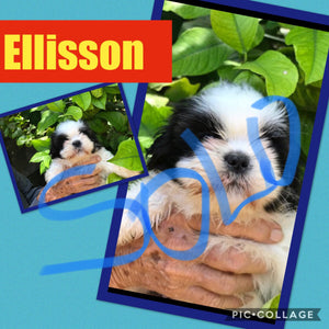 SOLD- Click On Picture For More Info- Deposit for Ellisson