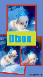 Click On Picture For More Info- Deposit for Dixon
