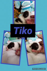 SOLD- Click On Picture For More Info- Deposit for Tiko