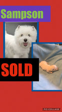 SOLD- Click On Picture For More Info- Deposit for Sampson