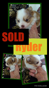 SOLD- Click On Picture For More Info- Deposit for Ryder