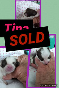 SOLD- Click On Picture For More Info- Deposit for Tina
