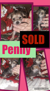 SOLD- Click On Picture For More Info- Deposit for Penny