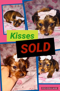 SOLD-Click On Picture For More Info- Deposit for Kisses
