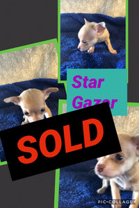SOLD- Click On Picture For More Info- Deposit for Star Gazer