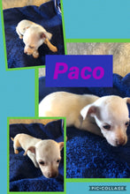 Click On Picture For More Info- Deposit for Paco