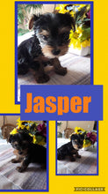 SOLD- Click On Picture For More Info- Deposit for Jasper
