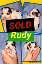 SOLD- Click On Picture For More Info- Deposit for Rudy