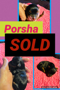 SOLD- Click On Picture For More Info- Deposit for Porsha
