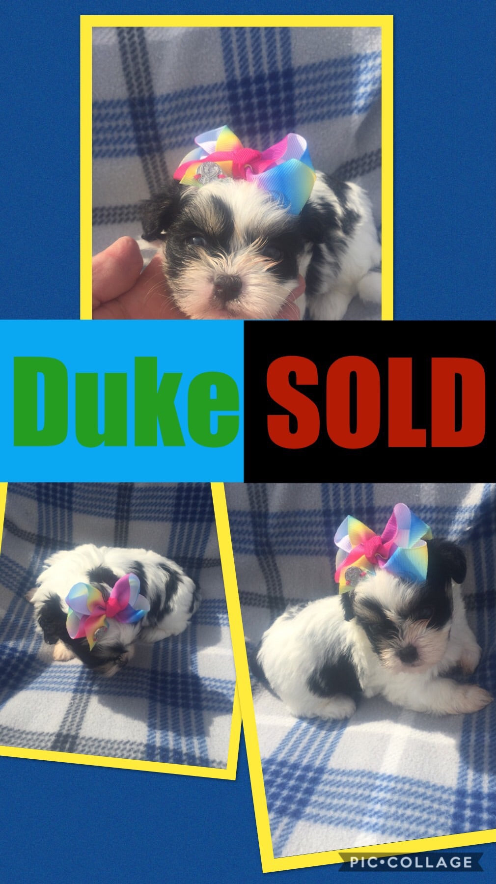 SOLD- Click On Picture For More Info- Deposit for Duke