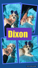 SOLD- Click On Picture For More Info- Deposit for Dixon