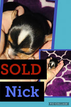 SOLD- Click On Picture For More Info- Deposit for Nick