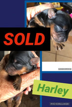 SOLD- Click On Picture For More Info- Deposit for Harley