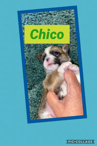 SOLD- Click On Picture For More Info- Deposit for Chico