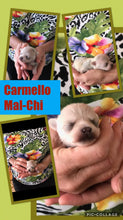 SOLD- Click On Picture For More Info- Deposit for Carmello