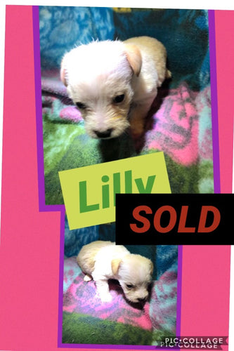 SOLD- Click On Picture For More Info- Deposit for Lilly