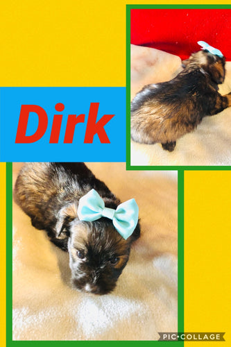 Click On Picture For More Info- Deposit for Dirk