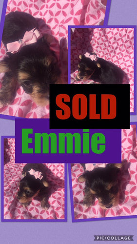 SOLD- Click On Picture For More Info- Deposit for Emmie