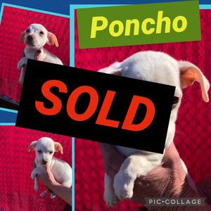 SOLD- Click On Picture For More Info- Deposit for Poncho