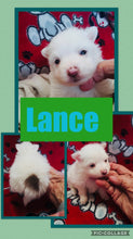 SOLD- Click On Picture For More Info- Deposit for Lance