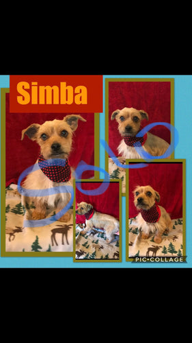 SOLD- Click On Picture For More Info- Deposit for Simba