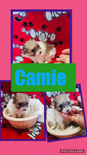 SOLD- Click On Picture For More Info- Deposit for Camie