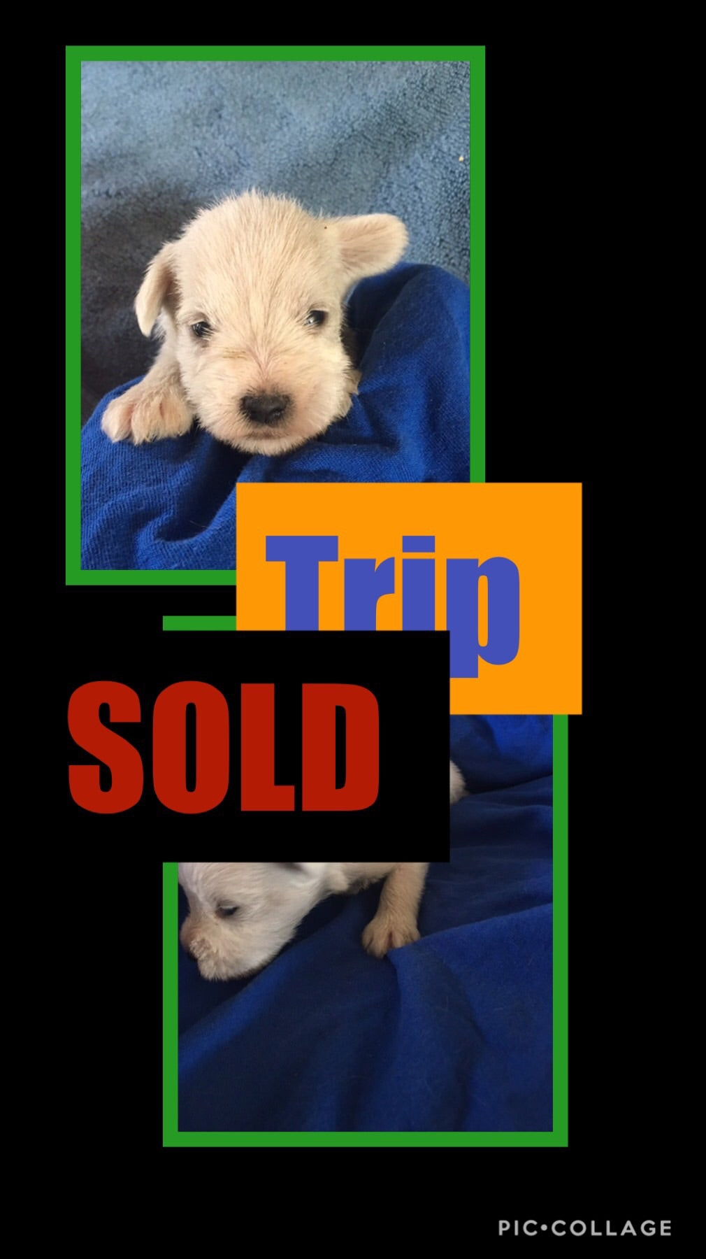 SOLD- Click On Picture For More Info- Deposit for Trip