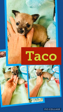 SOLD- Click On Picture For More Info- Deposit for Taco