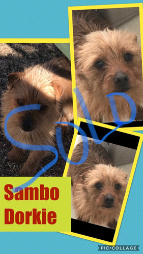 SOLD- Click On Picture For More Info- Deposit for Sambo