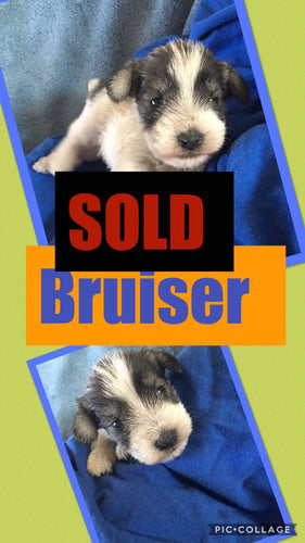 SOLD- Click On Picture For More Info- Deposit for Bruiser