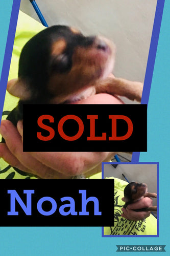 SOLD- Click On Picture For More Info- Deposit for Noah