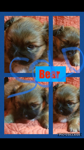 SOLD- Click On Picture For More Info- Deposit for Bear
