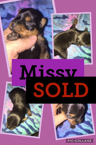 SOLD- Click On Picture For More Info- Deposit for Missy